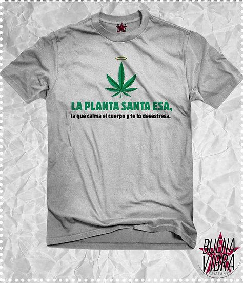 LA PLANTA SANTA