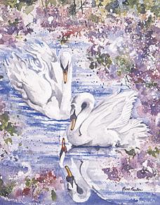 Spring Lake Swans