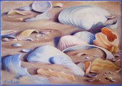 Bleached Shells