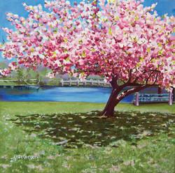 Blossom Time, SpringLake