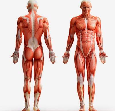 Desgarro muscular