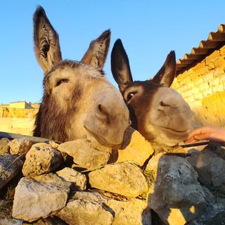 Mijn vrienden in Castrojeriz