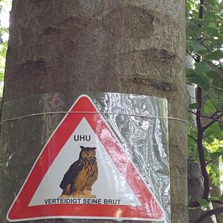De oehoe beschermt zijn nest!