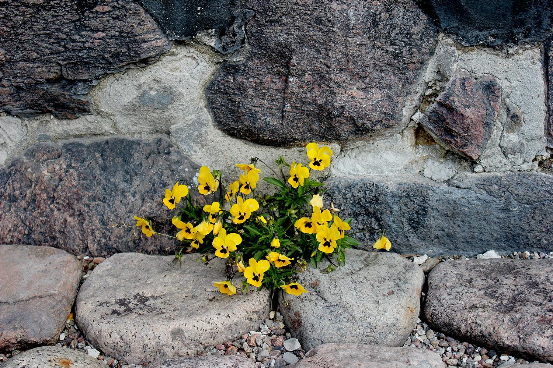 egebjergkirke_blomster