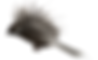 pajaros cursis (dragged)_edited_edited.p