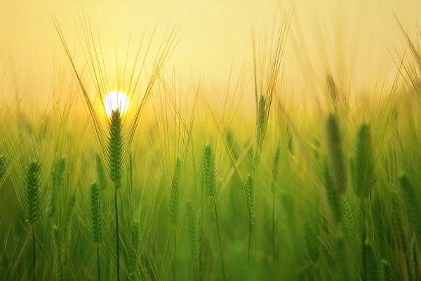 Lever de soleil dans un champ Dansmabulle-relaxation.com