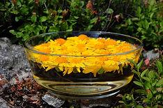 élixirs floraux, fleurs de bach