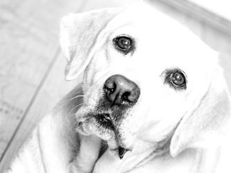 Tiergestützte Ergotherapie