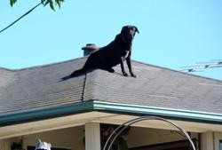 Dog on hot shingles