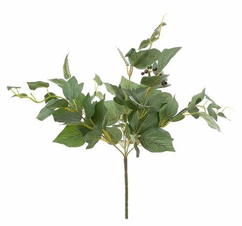 Hedera Bush | 43cm