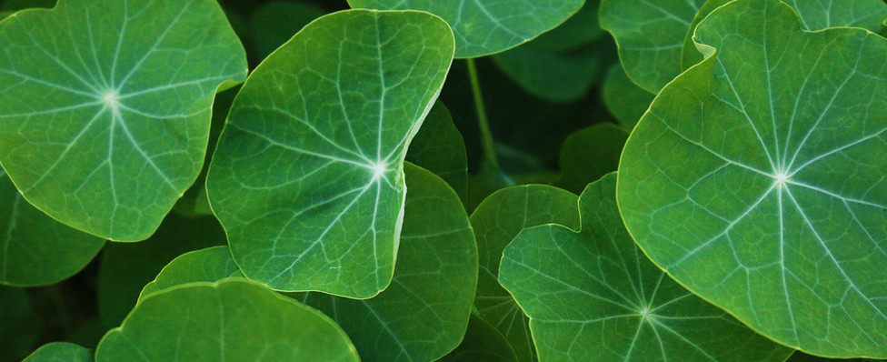 Aeris-Lush-Leaves-Website-Background2.jp