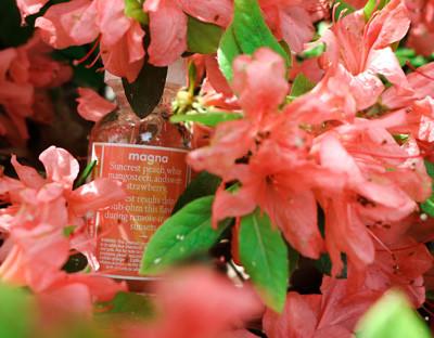 Aeris-Vapors-Magna-Pink-Flowers-Back.jpg