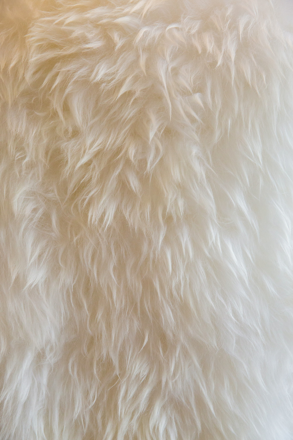 Sheepskin Rug Close Up