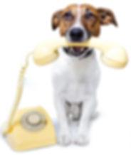 phone-dog-wp.jpg