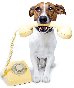 phone-dog-wp.jpg