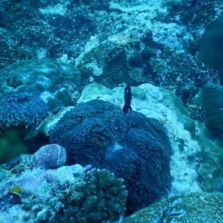 veel prachtig kleurrijk koraal ziet u tijdens het snorkelen.