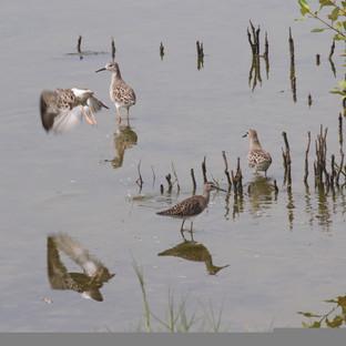 verschillende soorten vogels ziet u bij het water