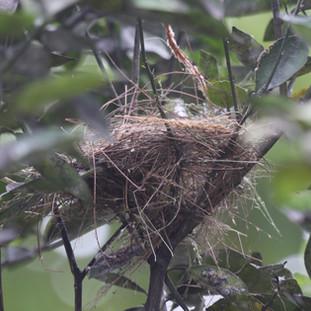 een klein vogelnestje van een honingzuiger in een boom