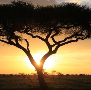 beautiful sunrise in Serengeti NP