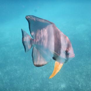 tijdens de twee snorkel stops ziet u prachtige vissen