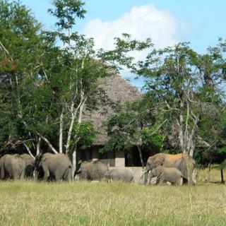 Veel olifanten komen de lodge bezoeken
