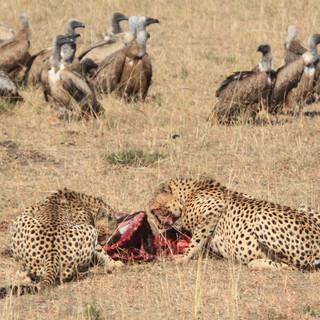 A regular scene at Masai Mara