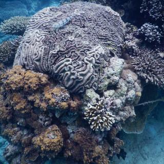 het onderwater leven heeft veel kleurrijk en mooi koraal
