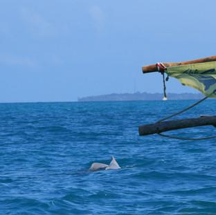grote kans om dolfijnen te spotten tijdens uw tocht naar de zandbank