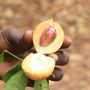 fresh nutmeg