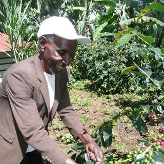 Local man picking coffee beans.