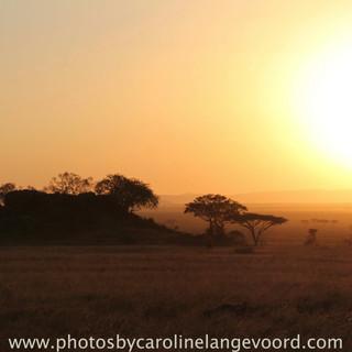 Beautiful sunsets in Serengeti