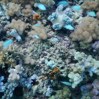 tijdens uw snorkelstop ziet u prachtige vissen en koraal