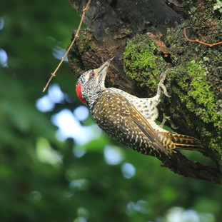 Beautiful birds at Lake Naivasha
