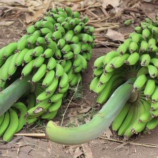 veel bananen in Mto Wa Mbu