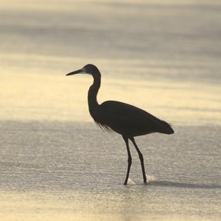 er zijn veel vogels op het strand tijdens de zonsondergang