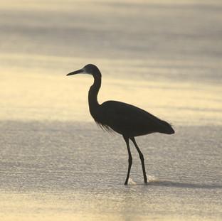 Nice birds at the coast