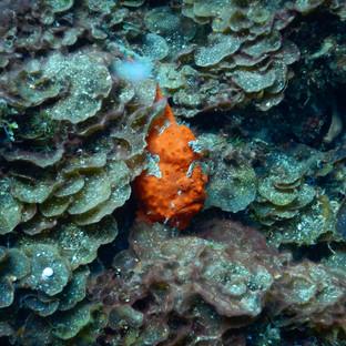 snorkeling 10.JPG