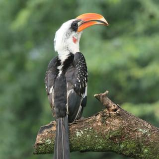 Lake Naivasha is a real bird paradise