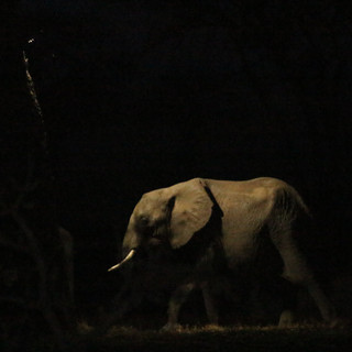 's Avonds komen de olifanten soms naar uw lodge