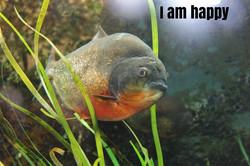 Sheila Fitzpatrick_I am happy_facial