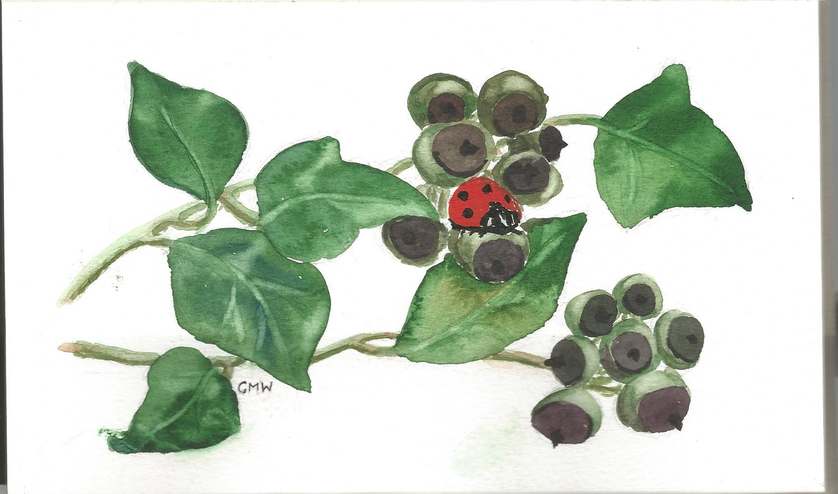 Ivy with ladybird