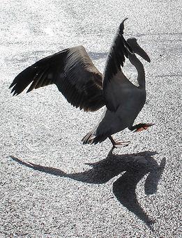 Shadow Dancing_Sheila Fitzpatrick.jpg