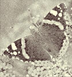 Joan Moore_Butterfly_point