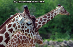Sheila Fitzpatrick_Answer is no_facial