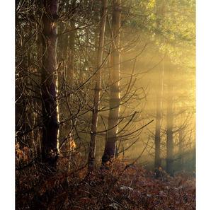 Golden Light in rendlesham Forest.jpg