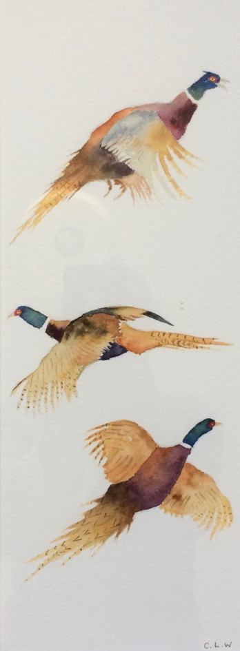 Pheasants - Chris Woodhead