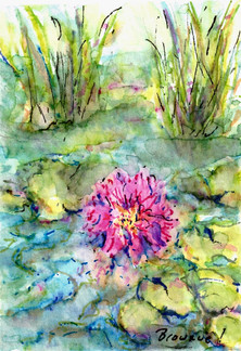 #2 of A Tiny Trio - Waterlilies and Lotus