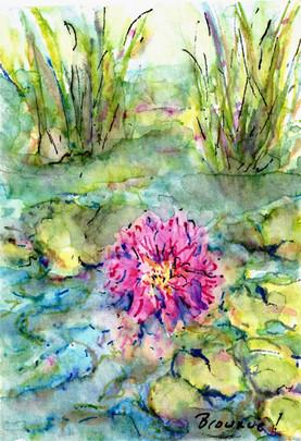 Tiny Lotus - #2 of 3