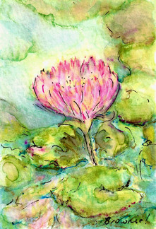 #3 of A Tiny Trio - Waterlilies and Lotus