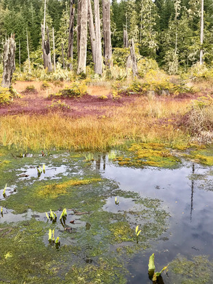 The Marsh Where Cranberries Grow